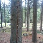 Blitz und Specht - Baum