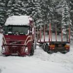 Schneeweis